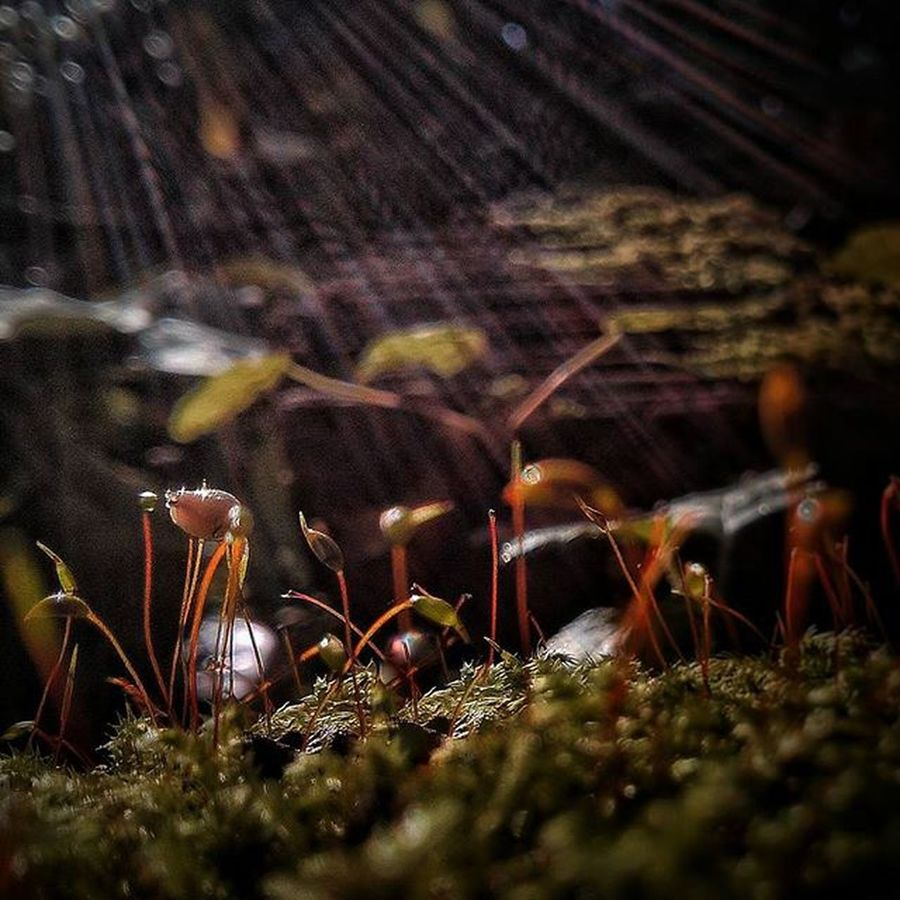 Moss Flowers Light Rays Grow Reaching For The Sun Landscapes With WhiteWall Here Belongs To Me Telling Stories Differently Showing Imperfection The Great Outdoors With Adobe Maximum Closeness