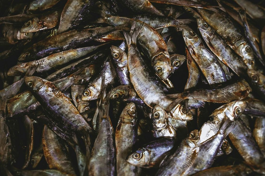 Tuyo, dinner of indiscriminate eater! What's For Dinner? Food Food Photography Filipino Food Herring Dried Fish  Salted Fish Fish VSCO