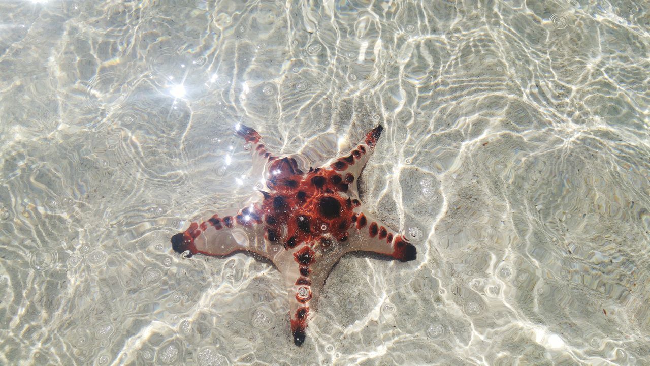 Not all star belong to the sky High Angle View Animal Themes Animals In The Wild Water Nature Sea Life No People Animal Wildlife One Animal Outdoors Day Beauty In Nature Close-up UnderSea Starfish  Starfish At Beach Travel Photography Tourism Vacations Nature Beach Belitung Island