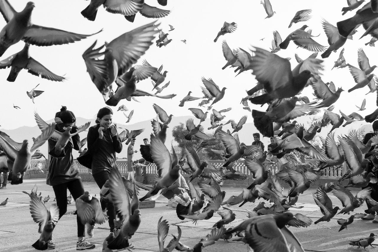 Jaipur Bird Black And White Flock Of Birds Flying India Jaipur Motion People Pigeons Street Photography Streetphoto_bw Travel