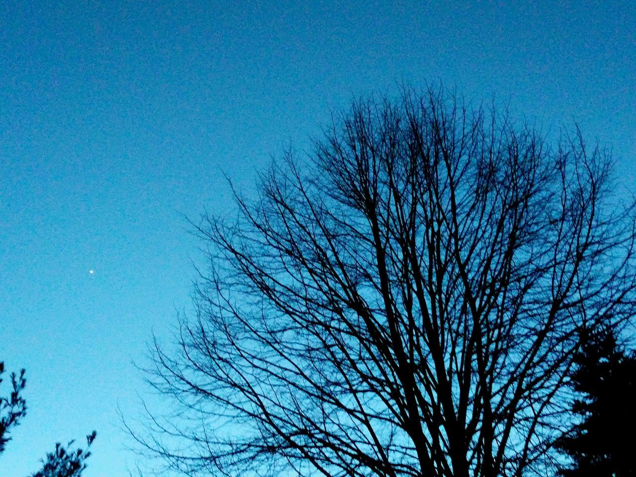 One star by tree Blue Sky Nature No People Outdoors Tranquility Astronomy Beauty In Nature EvningGlow Capture The Moment Clear Sky