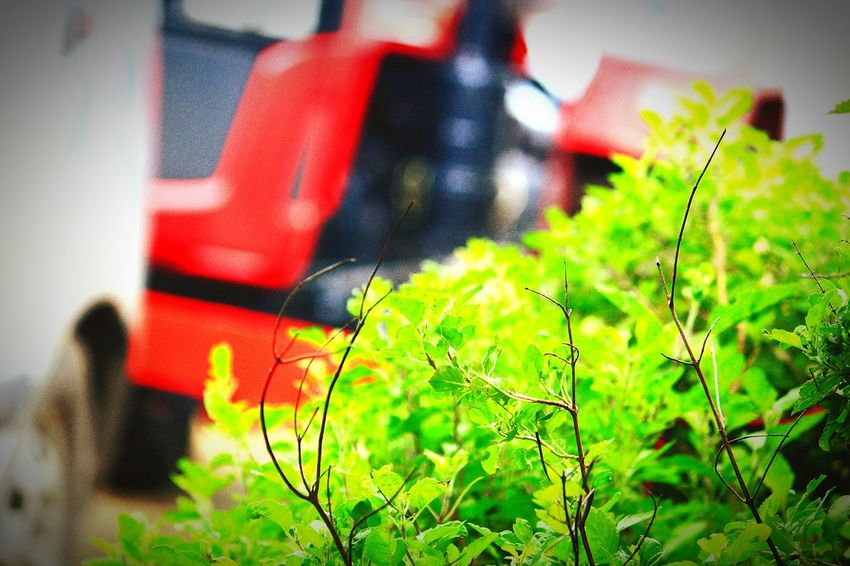 Selective Focus No People Outdoors Growth Grass Day Green Color Plant Red Built Structure Nature Architecture Close-up
