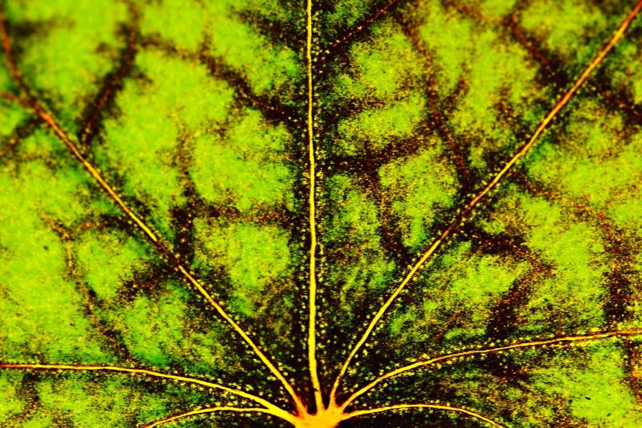 green color, no people, nature, close-up, leaf, growth, backgrounds, day, outdoors
