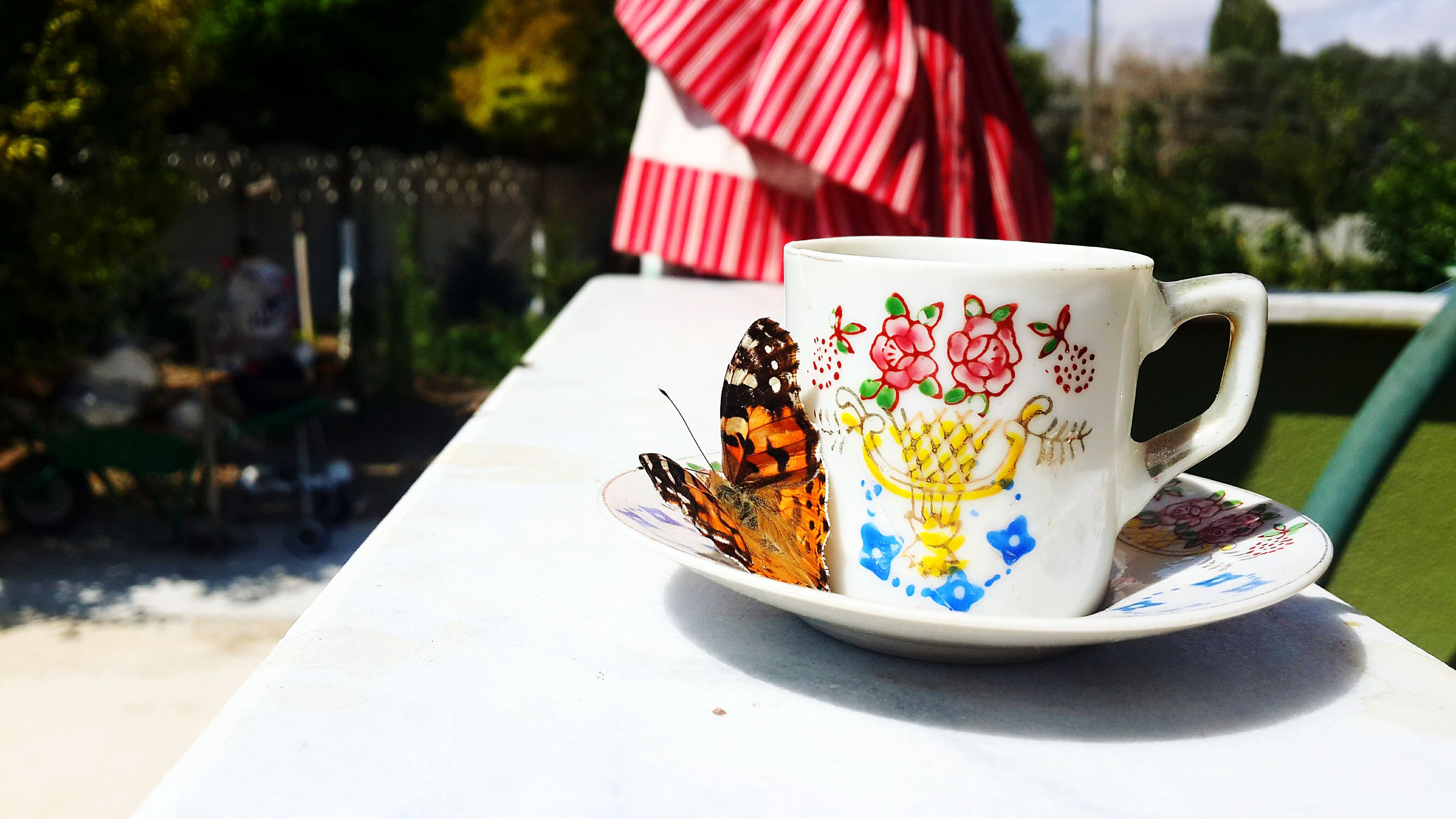Garden Wievfrommywindow Butterfly Coffee Old Coffee Cup Refreshment Holiday Relaxing Moments