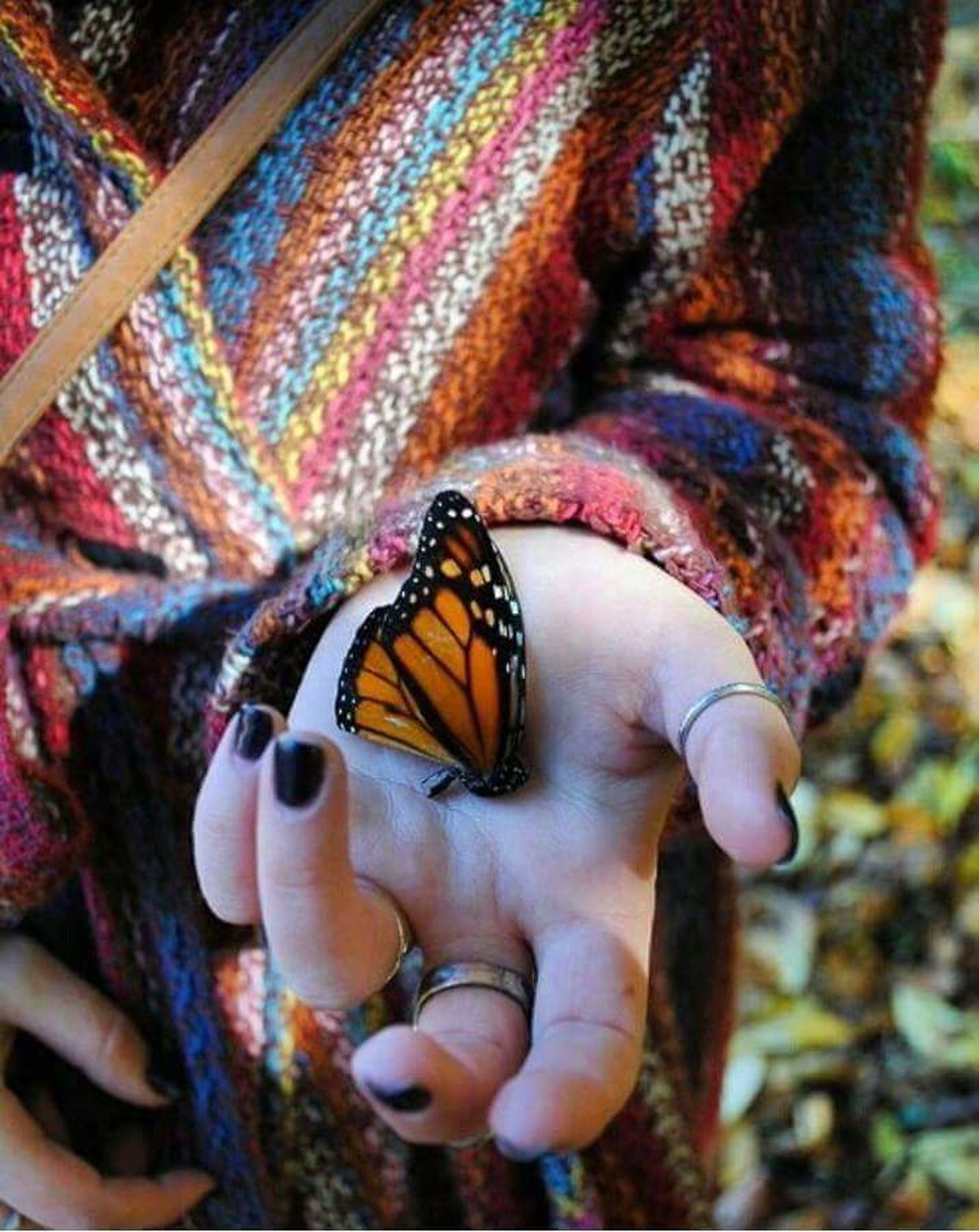 one animal, animal themes, insect, butterfly - insect, multi colored, nature, close-up, animal wildlife, animals in the wild, human hand, day, beauty in nature, outdoors, mammal, people