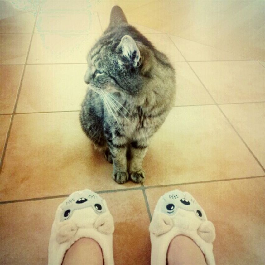 My Cute Cat <3 and my cute Dog Slippers ♥ ...No Friends... Never Ever ... Check This Out