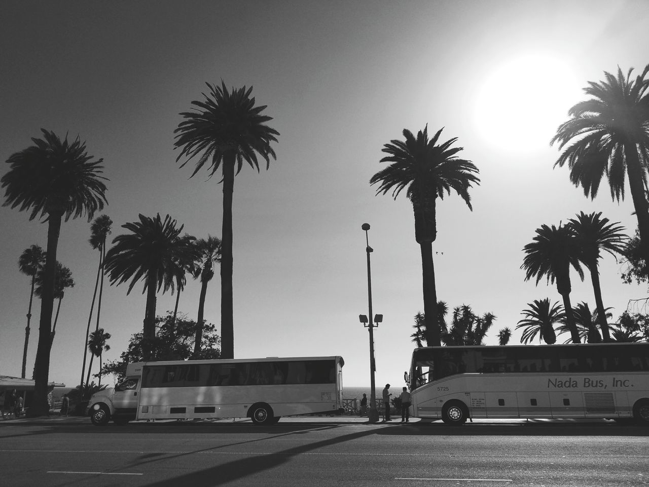 Palm Tree Sunlight Tall - High Transportation Low Angle View Sun Ontheroad People And Places Scenics Sunny Clear Sky Blue Tall Outdoors DaySunbeam Sea Bright Blackandwhite Photography Black And White Travel Destinations SoCal Santa Monica Pier Monochrome Photography