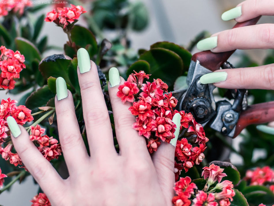 Flower Human Hand Plant Nature Close-up Growth Outdoors Freshness Leaf Flower Head Shears Scissor Cut Cutting Nails Flowers Fingers Long Nails Human Body Part Beauty In Nature Fragility One Woman Only Greenhouse Prune