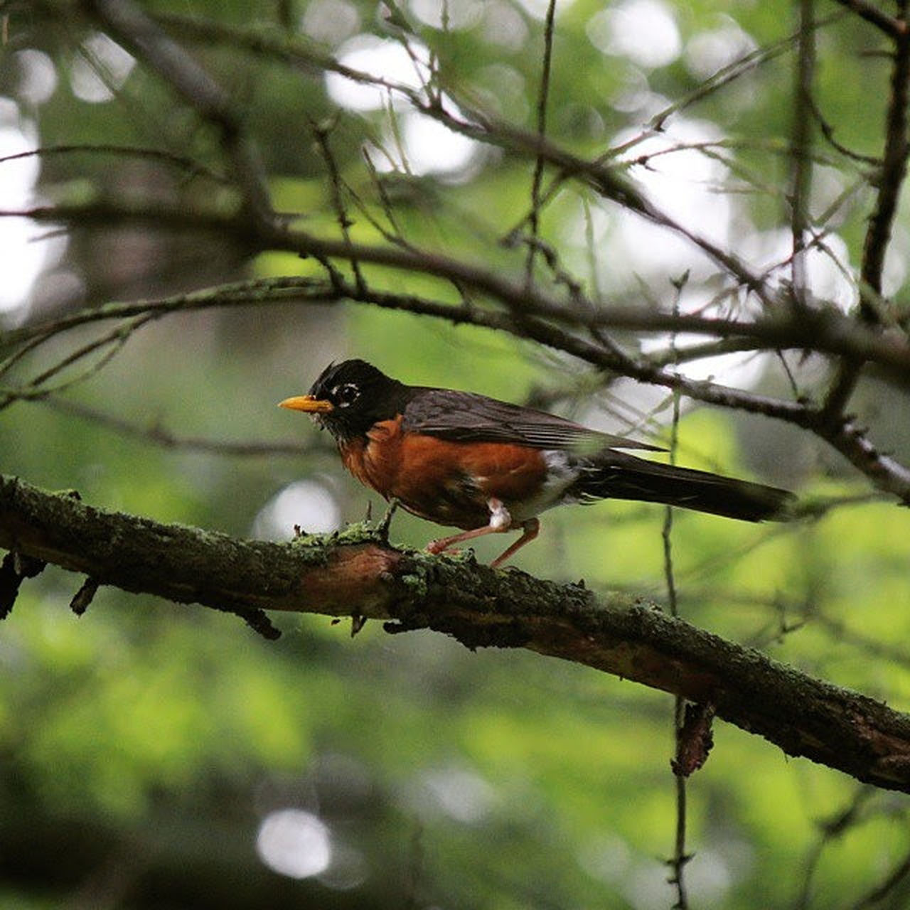 one animal, animal themes, tree, animals in the wild, bird, perching, branch, focus on foreground, day, no people, nature, animal wildlife, outdoors, beauty in nature, close-up