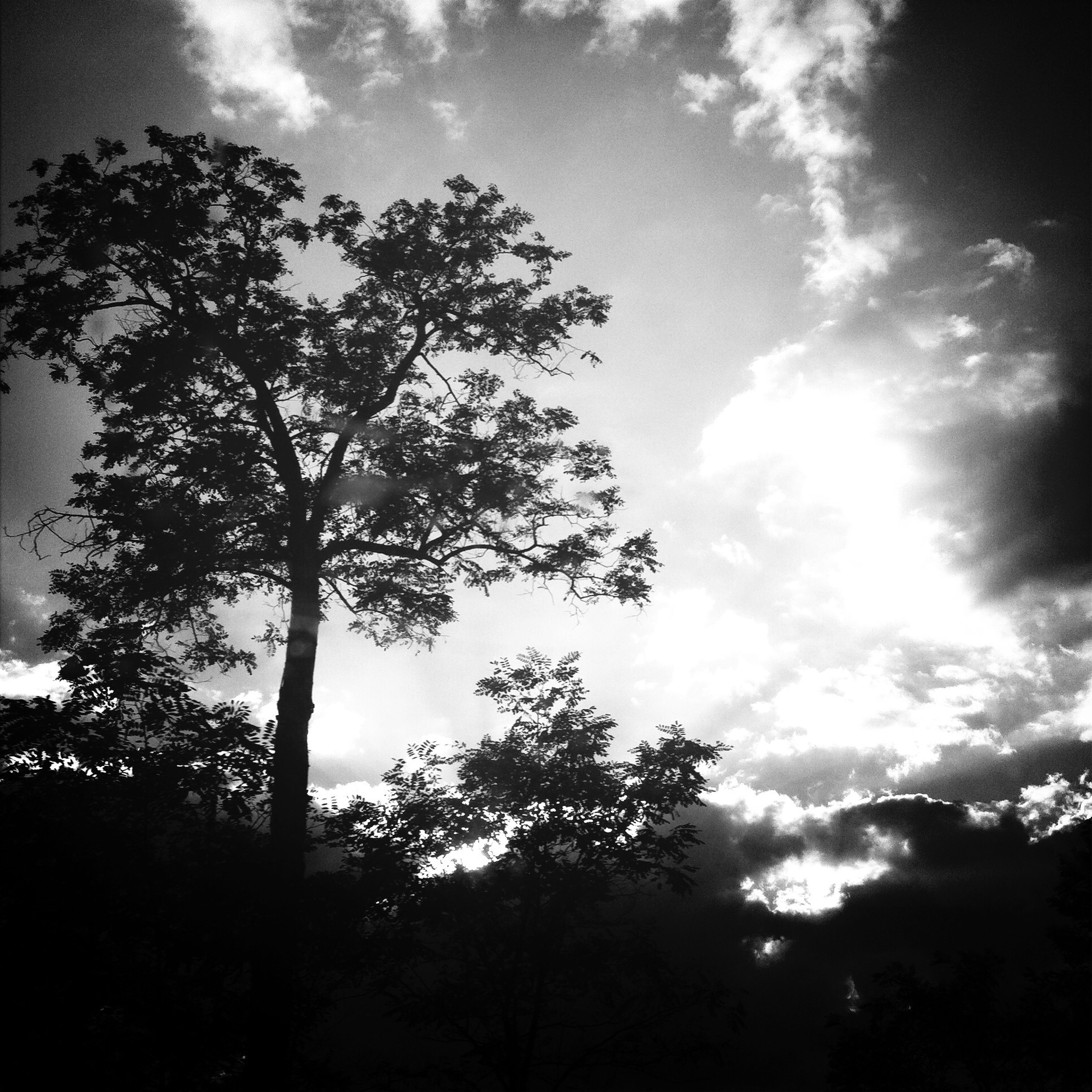 tree, silhouette, sky, low angle view, tranquility, cloud - sky, beauty in nature, tranquil scene, scenics, nature, growth, cloudy, cloud, branch, idyllic, outdoors, sunlight, no people, non-urban scene, non urban scene