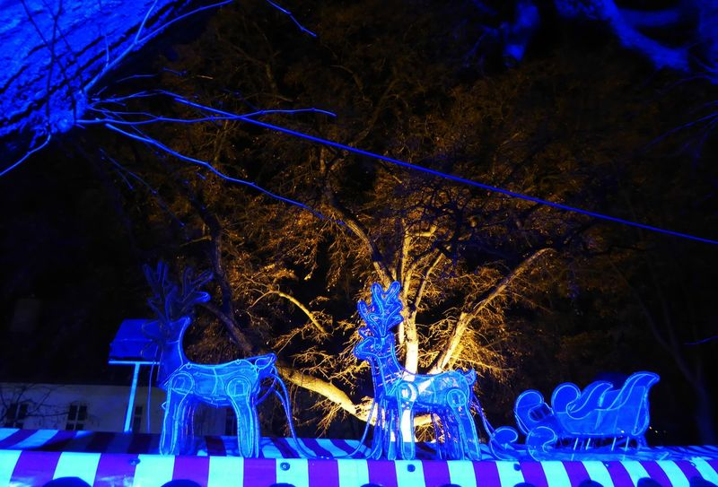Somewhere In Vienna😍 Illuminated Blue Night Christmas Lights Christmas Christmas Decoration Celebration Tree Tranquillity Simple Beauty For My Friends 😍😘🎁 Beauty In December😍 Enjoing Life Every Day Is A Gift Perfect Day With A Friend Austriaholidays Vienna's Calling😍😎 Sad X-Mas This Year For Soo Many People😳