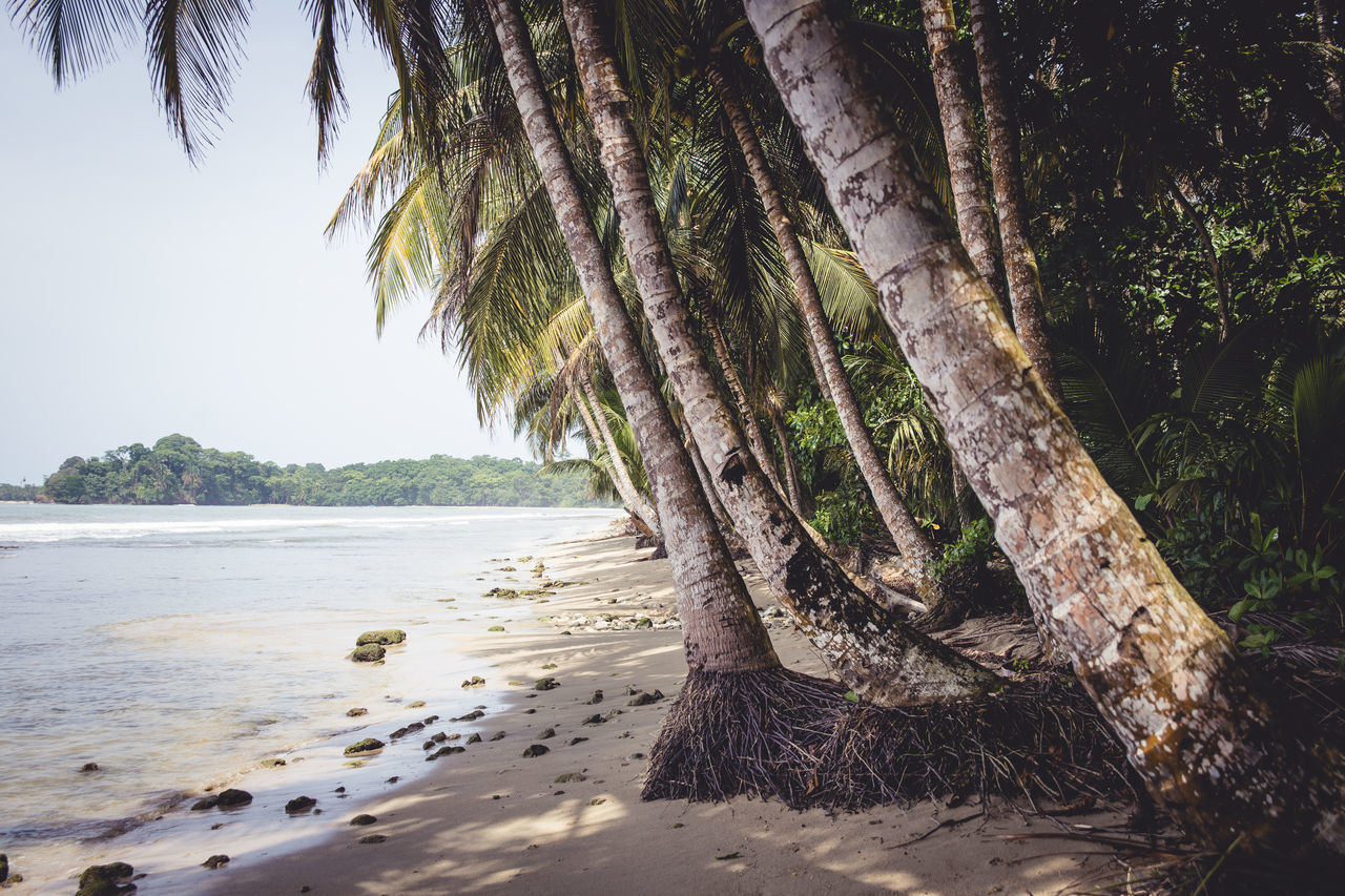 Beautiful stock photos of tropical, Beach, Beauty In Nature, Coastline, Day