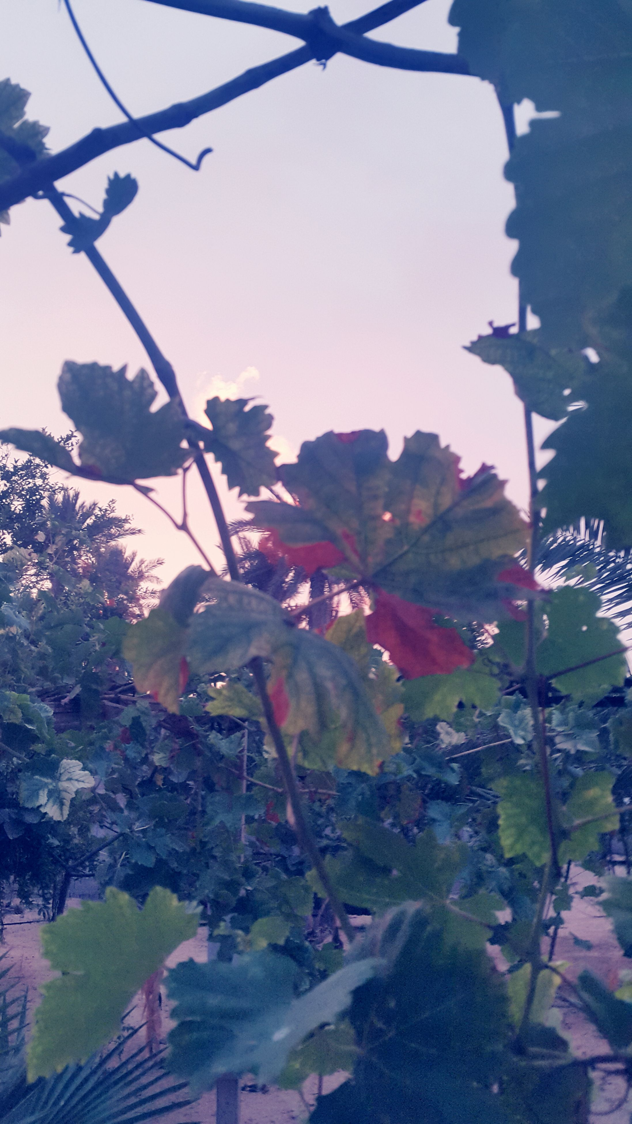 growth, leaf, flower, low angle view, plant, nature, clear sky, sunlight, tree, fragility, beauty in nature, sky, freshness, day, outdoors, no people, growing, built structure, close-up, branch