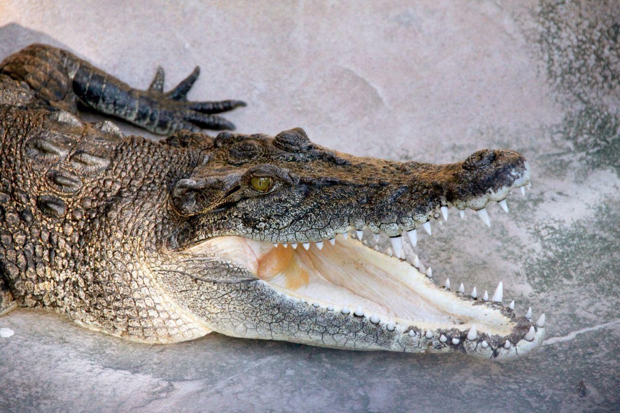 Beautiful stock photos of jungle, Animal Behavior, Animal Mouth, Animal Teeth, Animal Themes