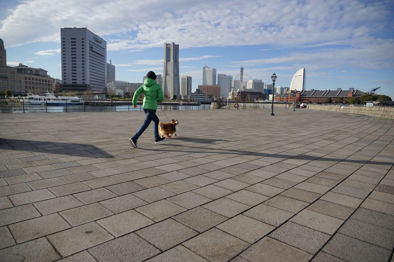 一歩でも散歩....(´ー`) People Watching I ❤️ Yokohama. Man And Dog City Life Walking Around Cityscape Urban Landscape Streetphotography City View  The Purist (no Edit, No Filter) EyeEm Best Shots - People + Portrait EyeEm Best Shots - Landscape EyeEm Best Shots - The Streets EyeEm Best Shots Snapshot Taking Photos お写ん歩