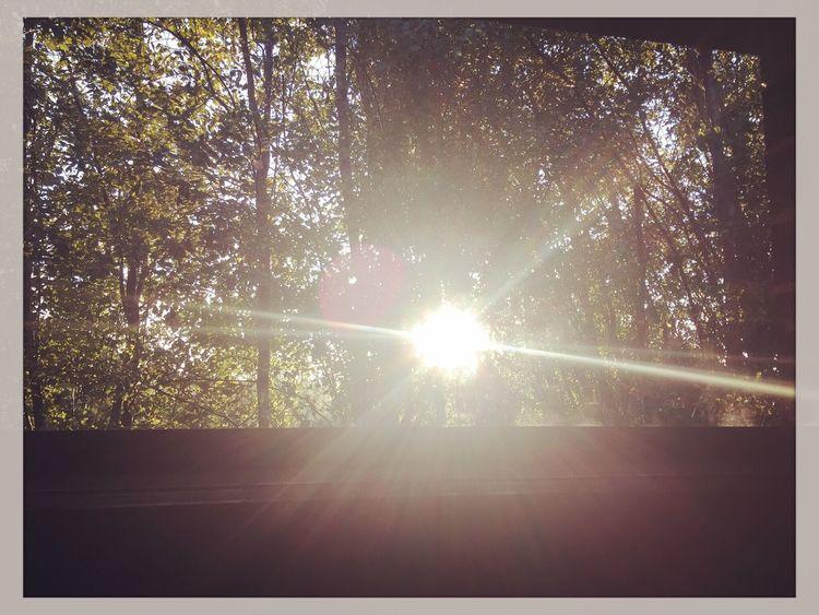Sun shining through the window ☀️🍃🌿 Sunshine Sunshining Sunset Throughthewindow Home Trees Beautiful