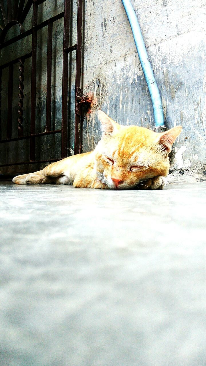 domestic cat, pets, animal themes, domestic animals, one animal, feline, mammal, relaxation, lying down, day, sleeping, no people, outdoors, ginger cat, close-up, nature