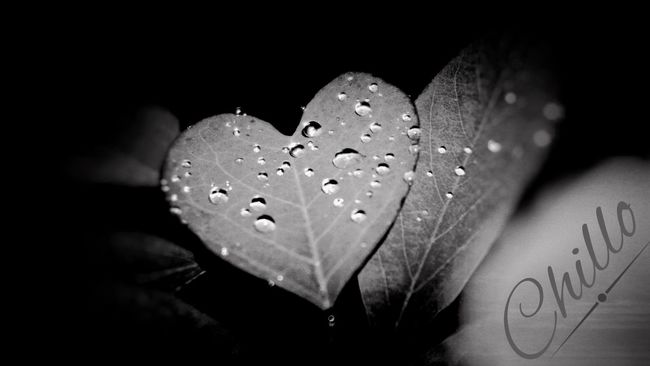 Weeping heart. Darkness And Light Photography Macro Blackandwhite Monochrome Blackandwhite Photography Eye4photography  Sony A6000 Rain Nature