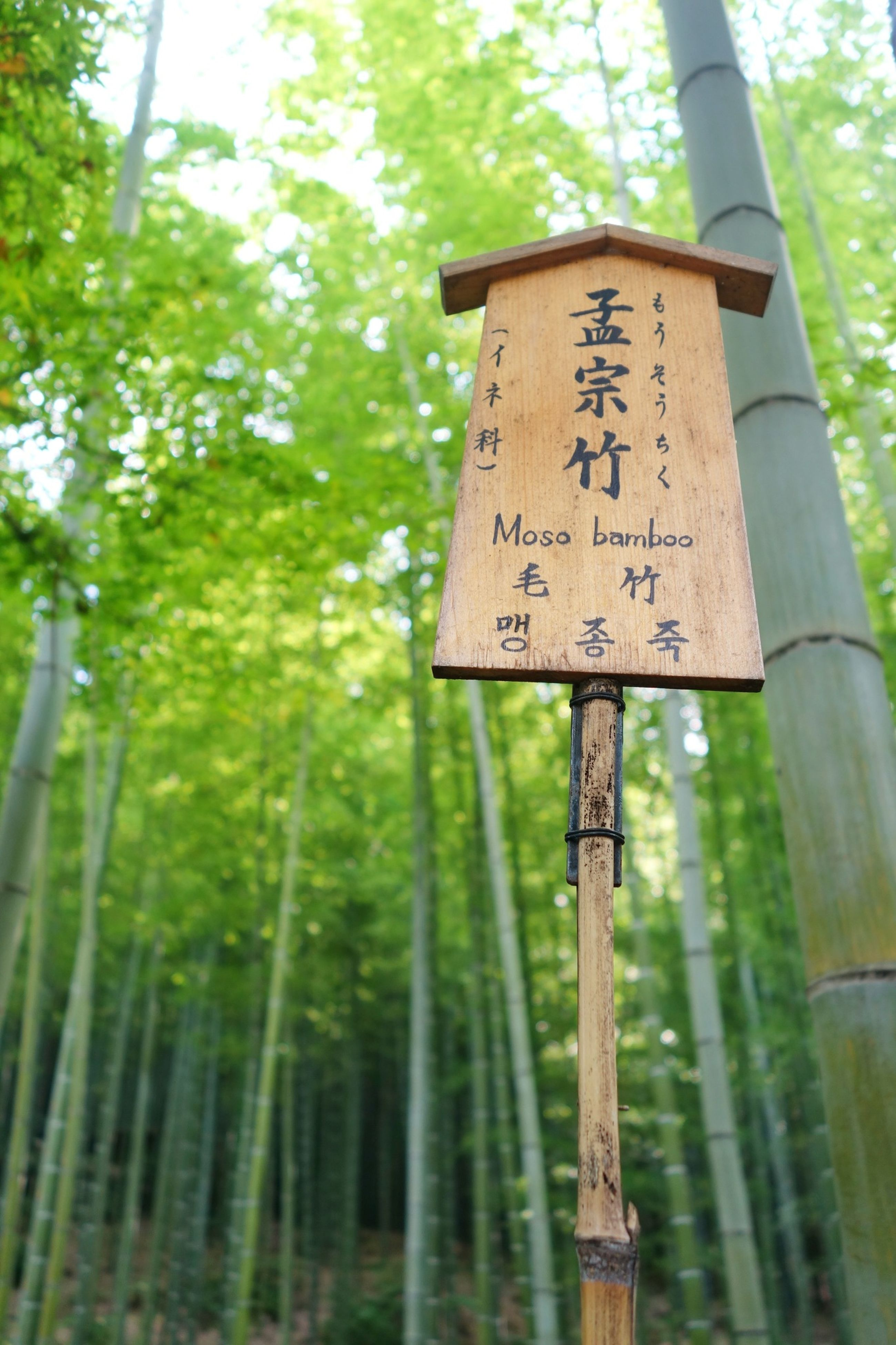 text, communication, tree, western script, information sign, sign, pole, guidance, growth, road sign, focus on foreground, close-up, information, nature, day, low angle view, tree trunk, non-western script, no people, directional sign