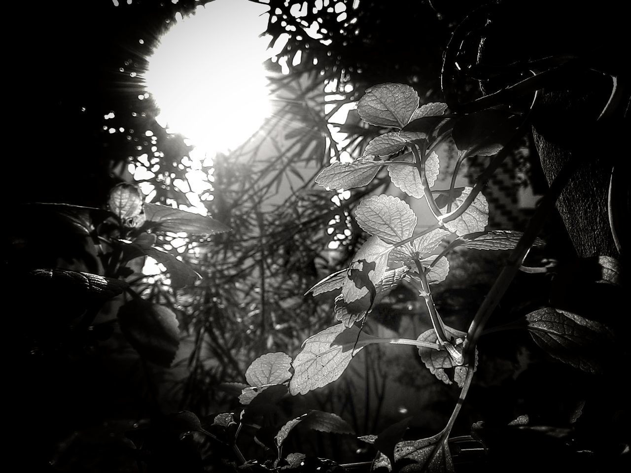 Monochrome Photography Nature Close-up Plant Life Outdoors Leaves Blackandwhite Sunrise Lenkacam GoodMorningWorld