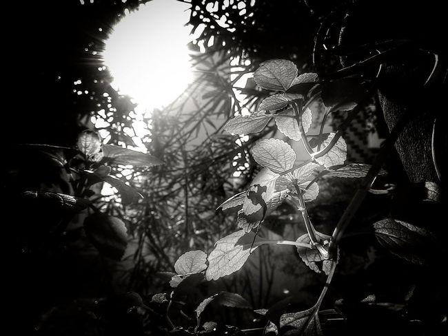 Monochrome Photography Nature Close-up Plant Life Outdoors Leaves Blackandwhite Sunrise Lenkacam GoodMorningWorld