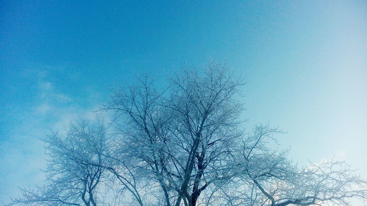 bare tree, low angle view, nature, tree, beauty in nature, clear sky, day, blue, outdoors, no people, tranquility, branch, winter, scenics, cold temperature, sky