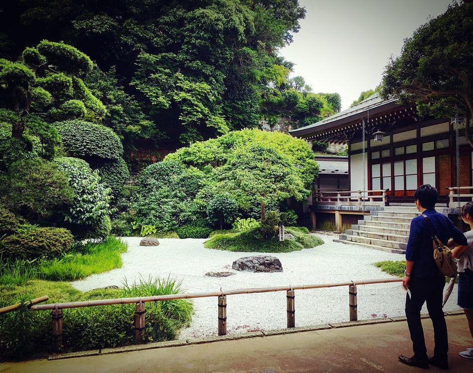 報国寺 金沢街道エリア 鎌倉 Kamakura Relaxing