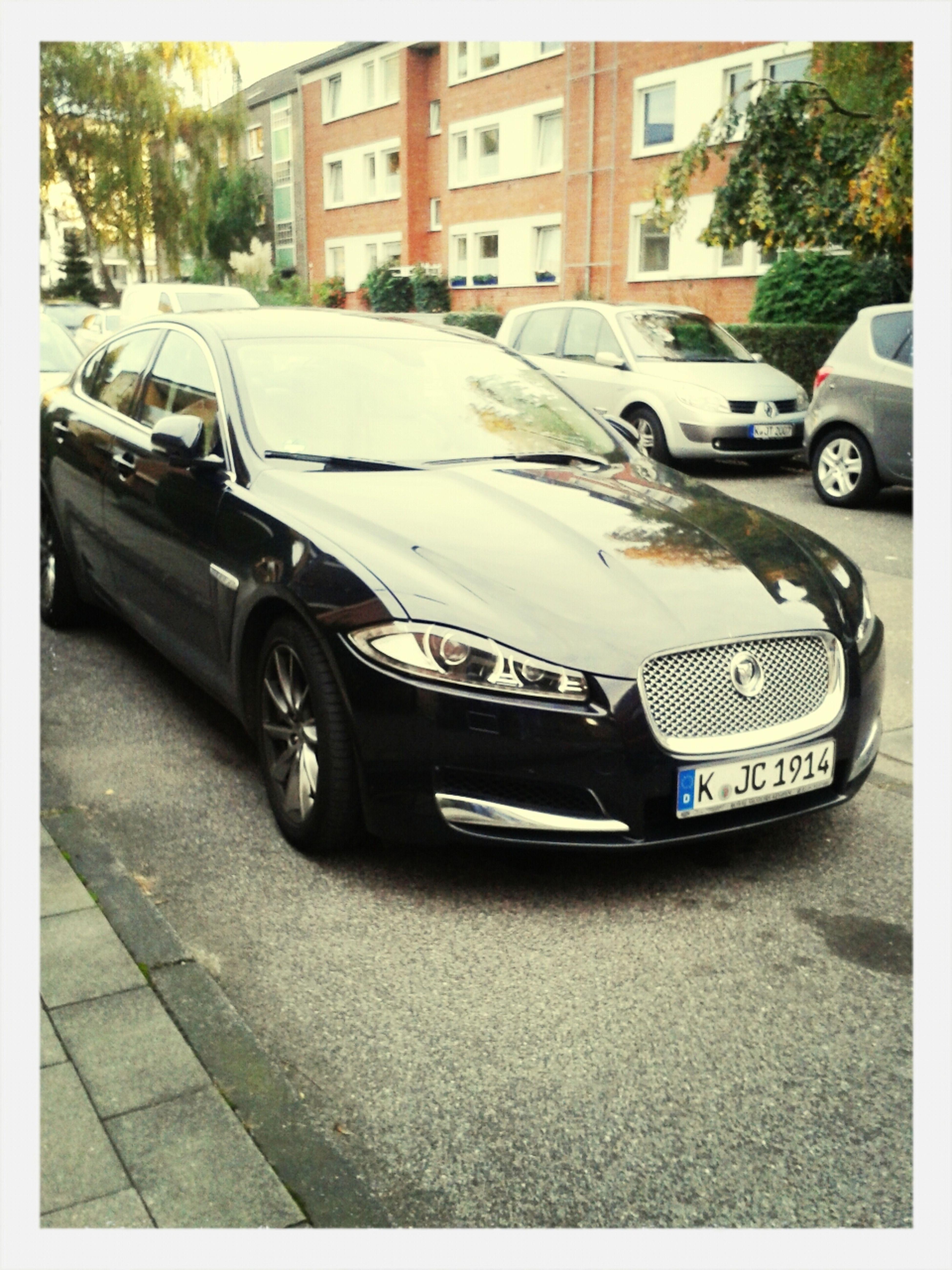 Jaguar Bilderstöckchen