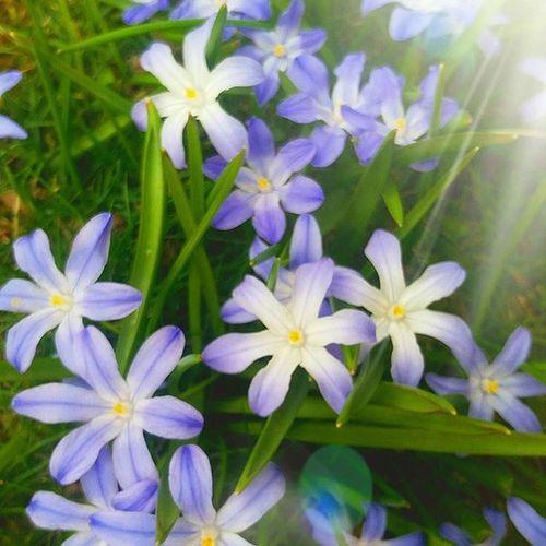 Eh... Spring in Sweden 😮😨 Springishere Springtime Frühjahr Floder Nature Art