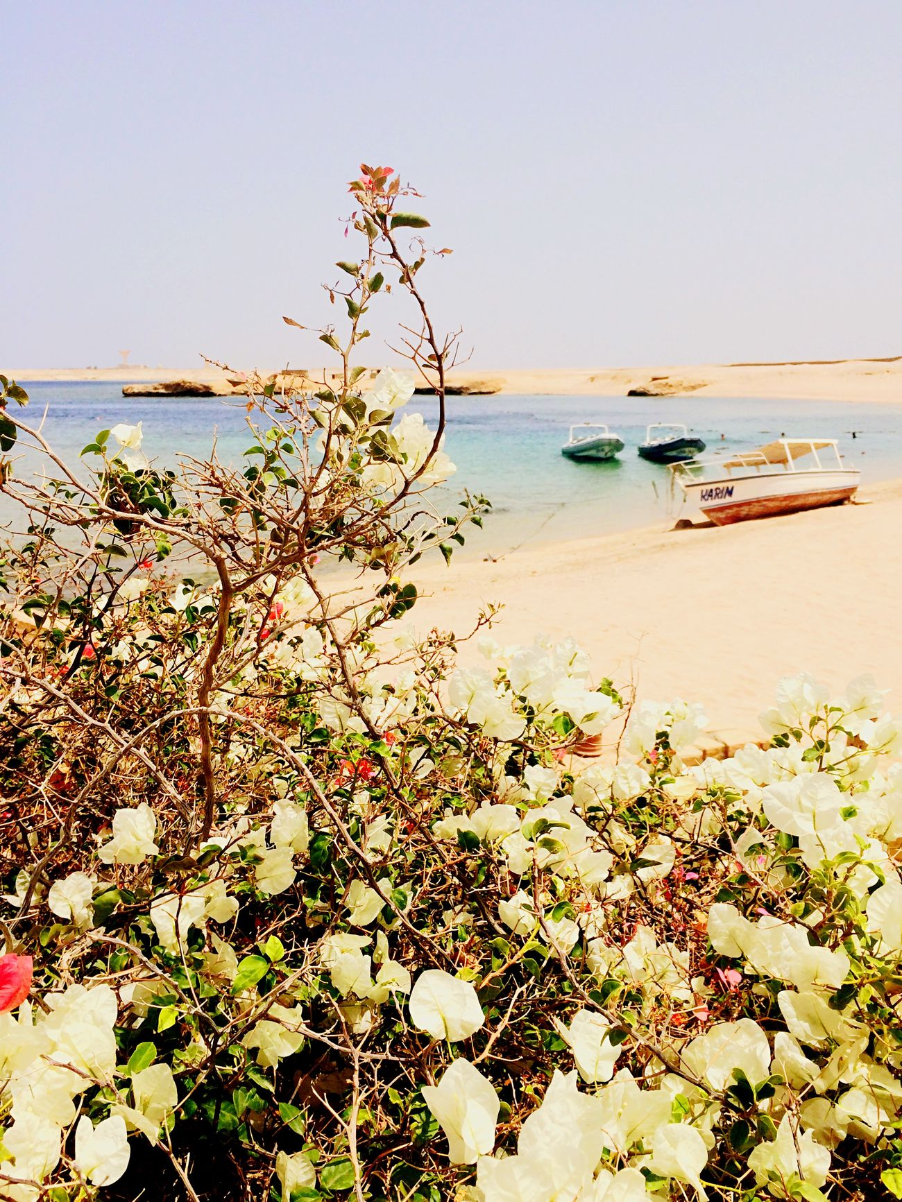 Red Sea Holiday2015