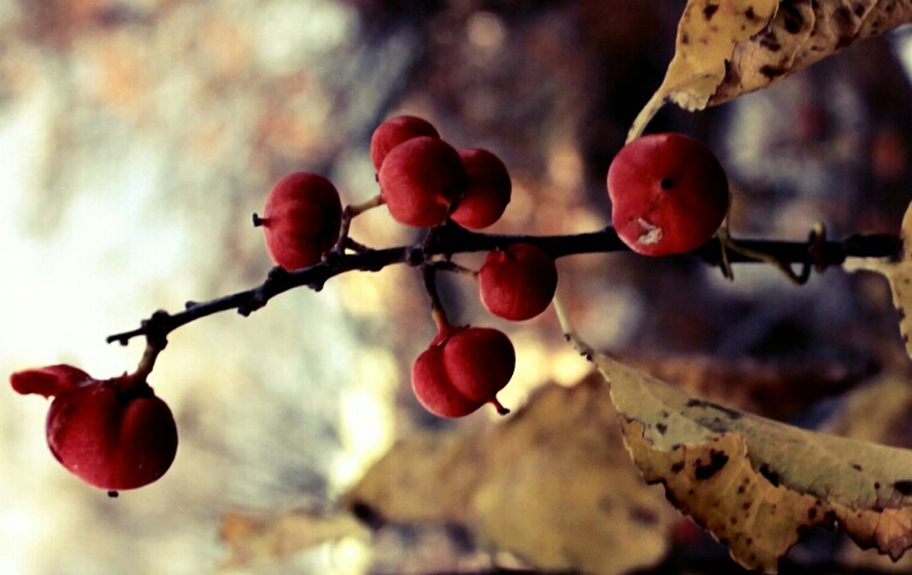 Flowers Berries Trees Colors Autumn Autumn Leaves