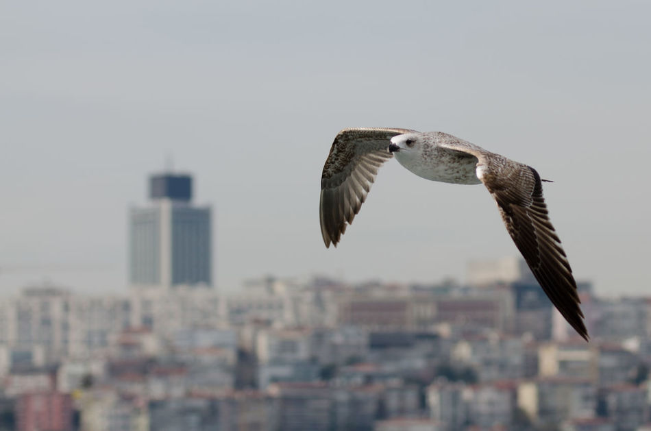 Beautiful stock photos of wings, Animal Themes, Animal Wing, Animals In The Wild, Architecture
