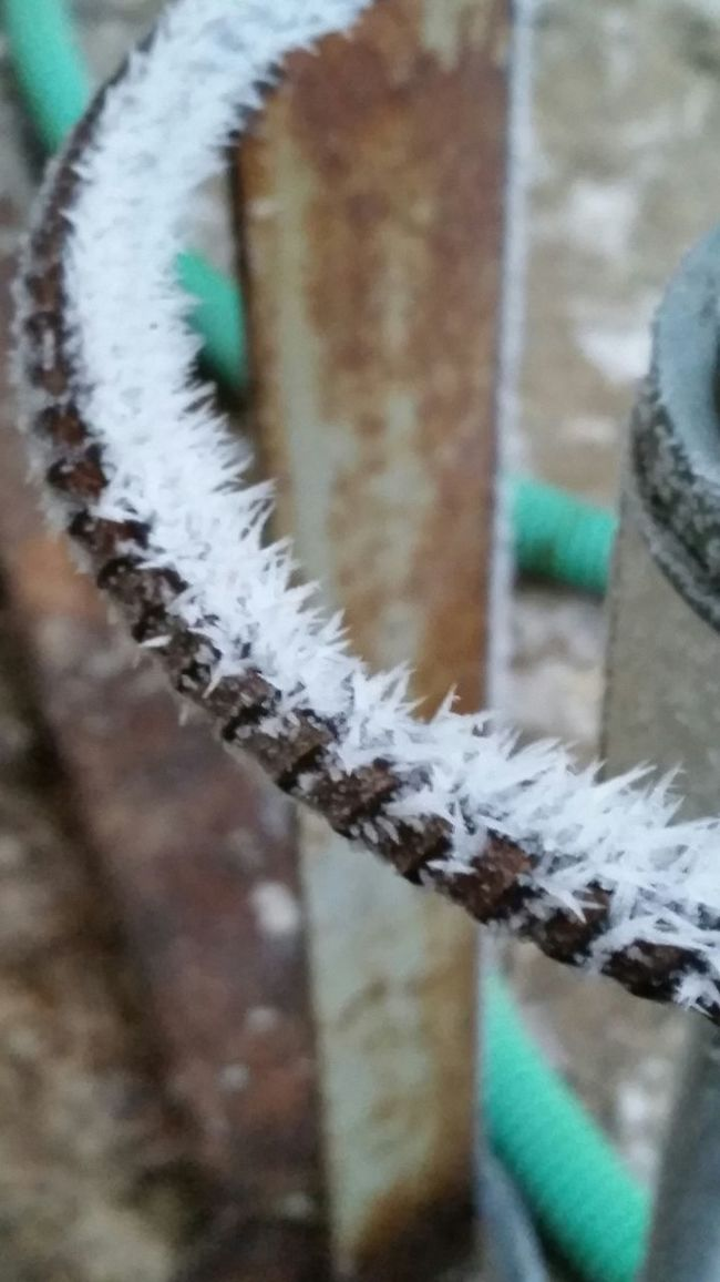 Some hoar frost at work Nature Natural Beauty Hoarfrost Work