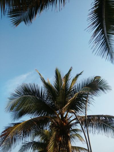Coconut Trees Smells Nature Add Colour To Life
