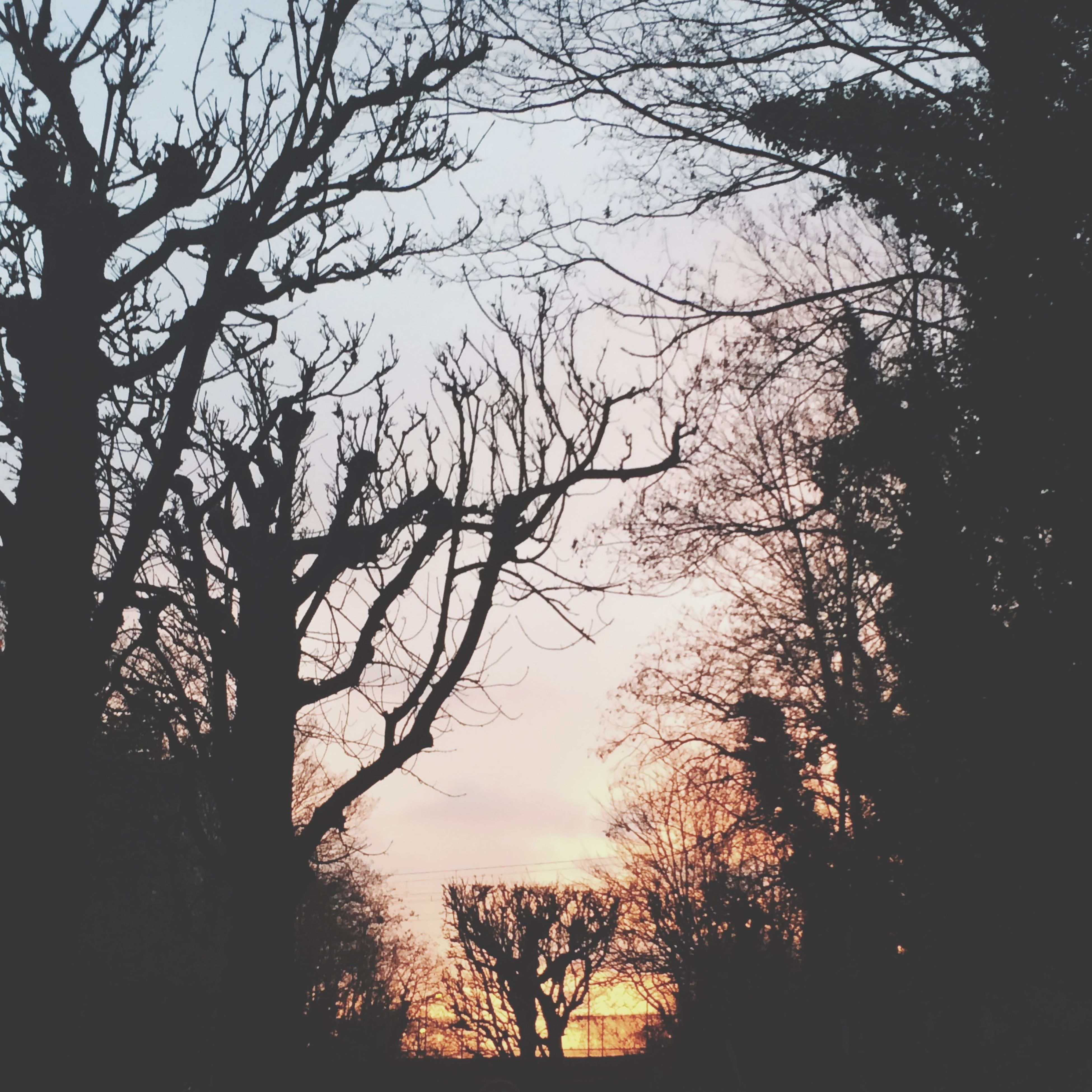 silhouette, tree, branch, tranquility, sunset, beauty in nature, tranquil scene, scenics, sky, nature, bare tree, low angle view, growth, idyllic, outline, dusk, tree trunk, outdoors, no people, non-urban scene