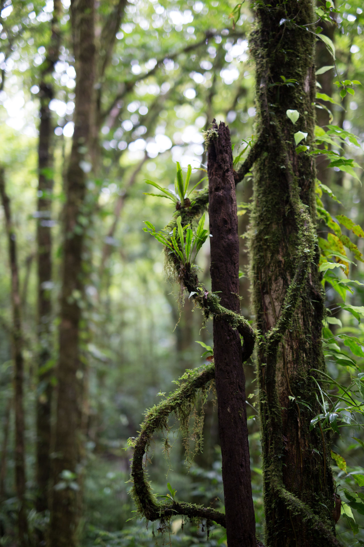 Beautiful stock photos of rainforest, Botany, Day, Growth, Liana