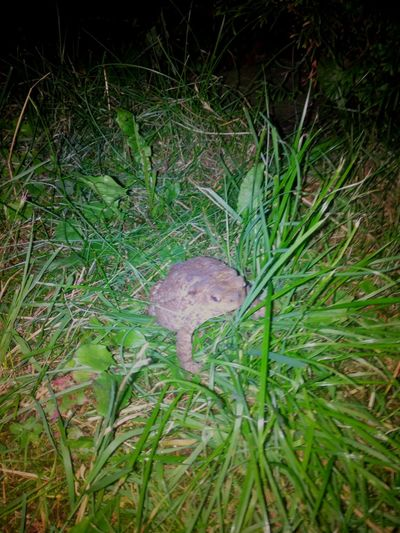 Toad Label Jumper Found in my Garden. Its created with the Cam from my New THL5000. I Love ♥ it!Myfirst Eyeem Photo