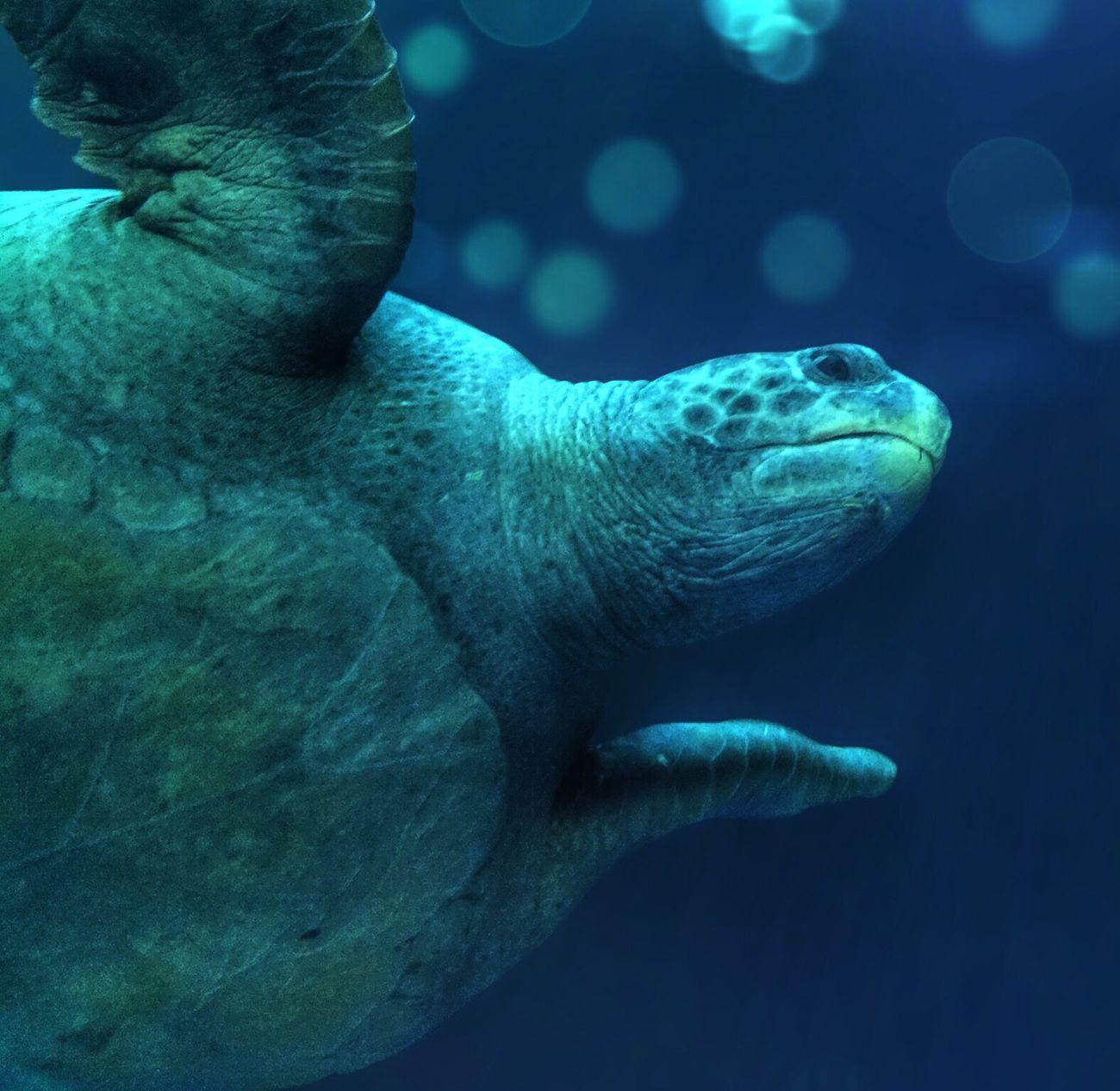 Sea Turtle Monterey Bay Aquarium EyeEm Ambassador Blue Ocean