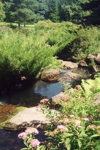 В японском саду. Природа пейзаж вода Nature Water Landscape Plant Freshness No People Tree Green Color Tranquility Scenics