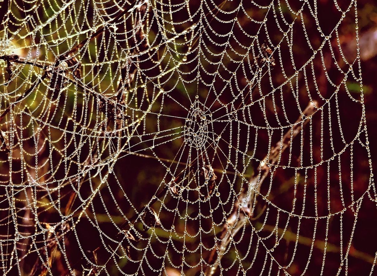 Beauty In Nature Close-up Detail Drop Fragility Nature Spider Web Water Wet