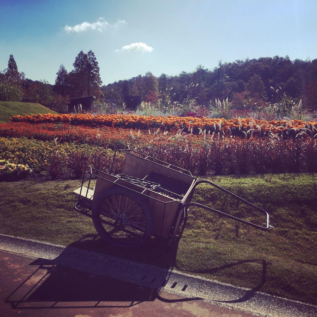 お花畑 イベント 絵になるね 青空 オブジェ 木洩れ日 Hello World Flower Wonderful Place Expo 2005 Aichi Japan