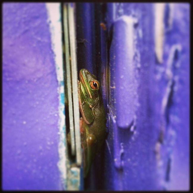198/365 Deadboltfrog Purpledoor Creepin