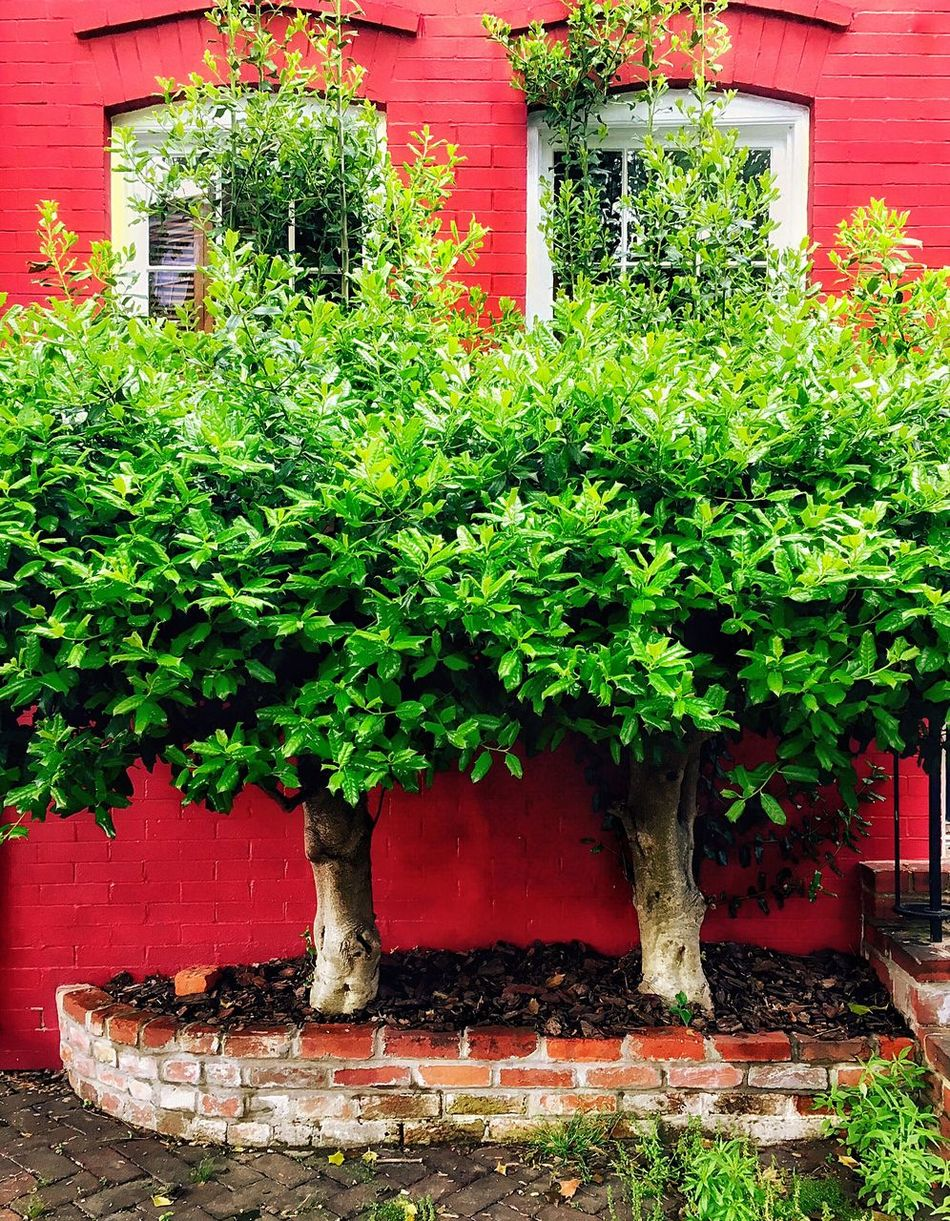 The Happy House, the name I've given to the next door neighbor of the Spite House. Happy Streetphotography House Red Oldtownalexandria Welcoming Urban Nature Alexandria, VA Historical Building Historic Places Love Your Hometown Little Landscape Landscape Sidewalk Photograhy