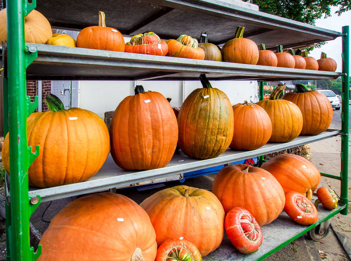 Pumpkins different shapes and sizes in the street market Agriculture Autumn Autumn Harvest October September Shapes Autumn Vegetables Close-up Fall Halloween Harvest No People Orange Color Outdoors Outdoors Market Pumpkin Season  Seasonal Selling Shelfes Store Symbol Variation