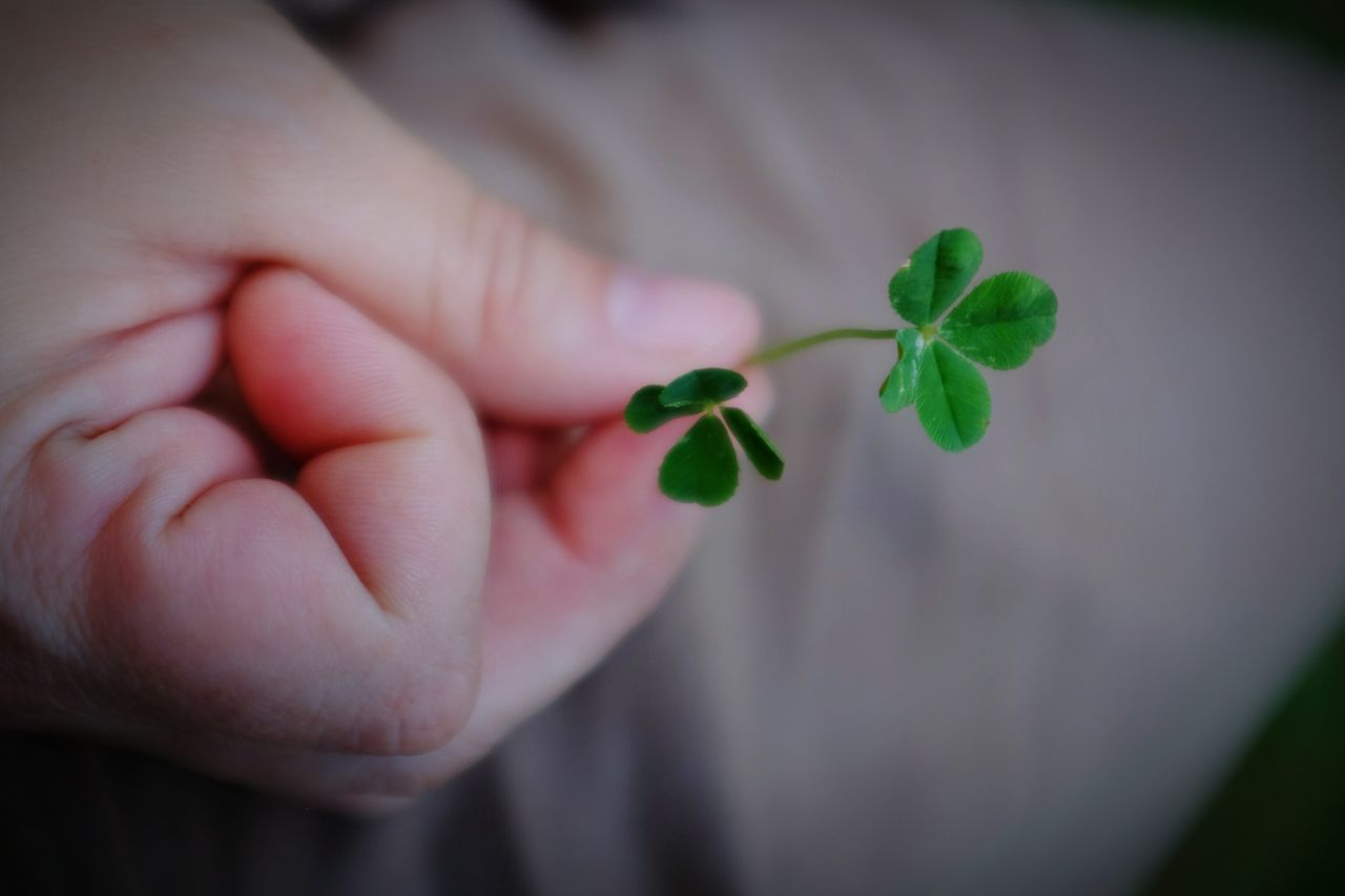 Beautiful stock photos of st patricks day, Close-Up, Clove, Cropped, Day