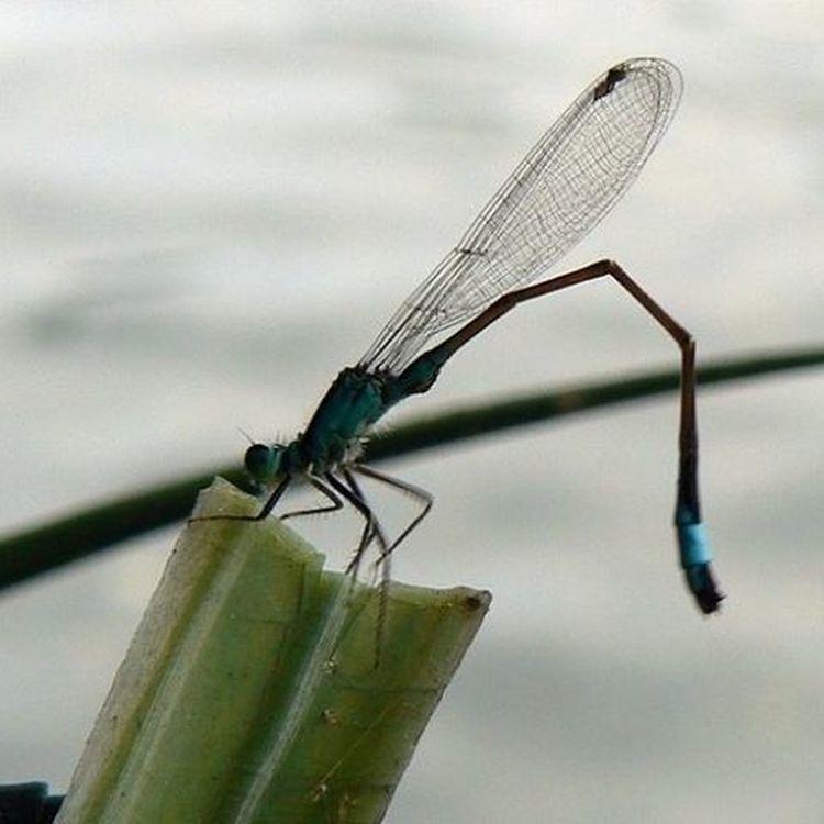 ważka 💖😊🌾 Lake Dragonfly Macro Photography Amateurphotography Ważka Jezioro Makro Panasoniclumix 📷 Panasonic  Photoblogger Like4like L4l F4F Follow4follow Instadaily