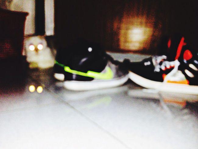 My Cat guarding my Sneakers Sneakers Addict New Sneakers ?? at dawn