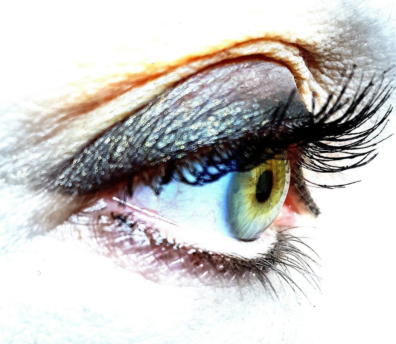 human eye, eyelash, looking at camera, eyesight, human body part, portrait, one person, eyeball, close-up, iris - eye, real people, sensory perception, eyebrow, day, people