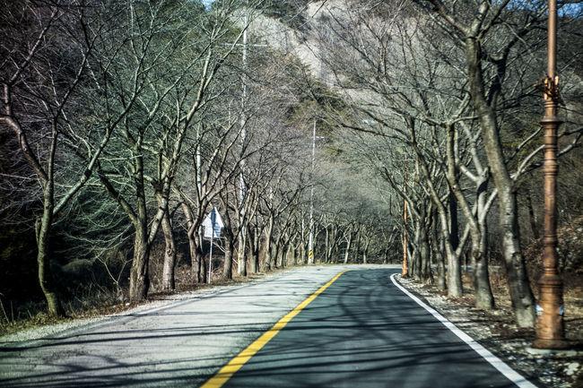 Bare Tree Beauty Of Line Calm Jeolabukdo Jinan Korea Mai Mountain No People Road Tranquility Winter