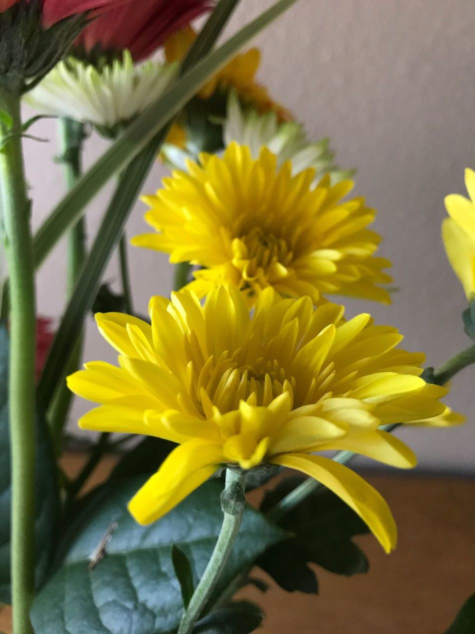Flower Yellow Fragility Petal Nature Freshness Beauty In Nature Flower Head Plant Growth Close-up No People Sunflower Day Outdoors